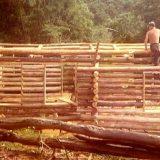 laying-logs